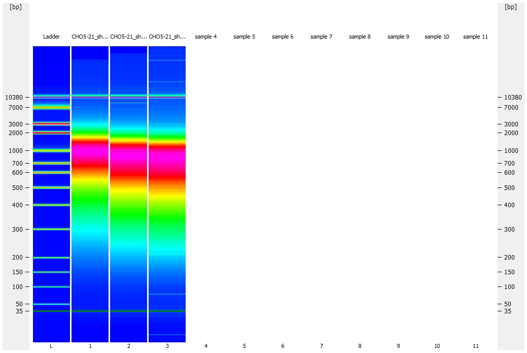 Bioanalyzer gel representation and comparison for _M.magister_ gDNA sheared for 40, 45, and 50 cycles
