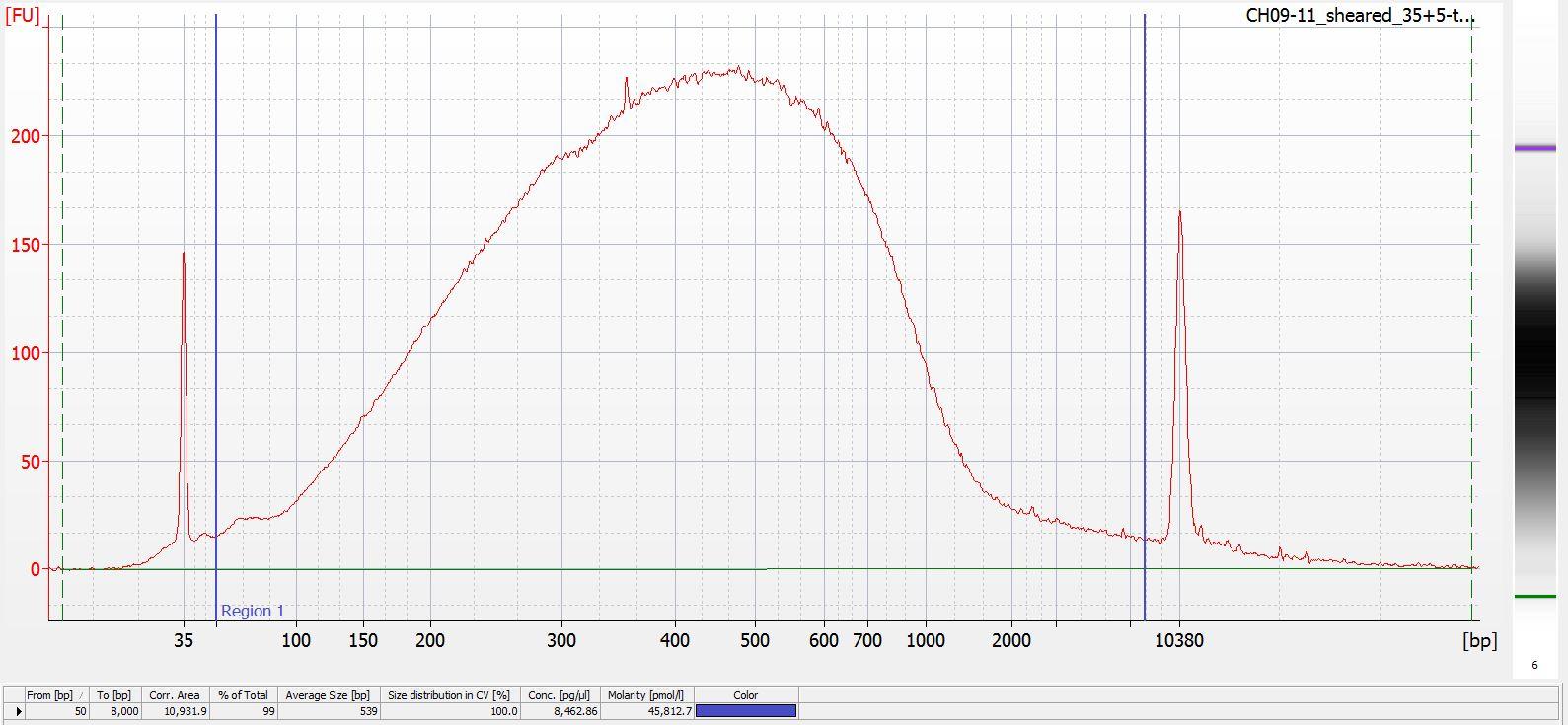 Sheared CH09-11 Bioanalyzer electropherogram