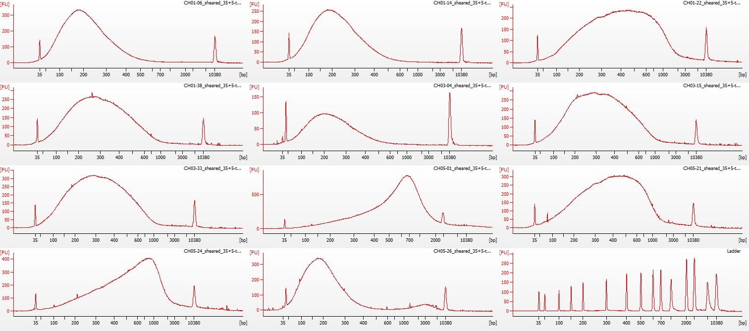 Sheared all-01 Bioanalyzer electropherogram