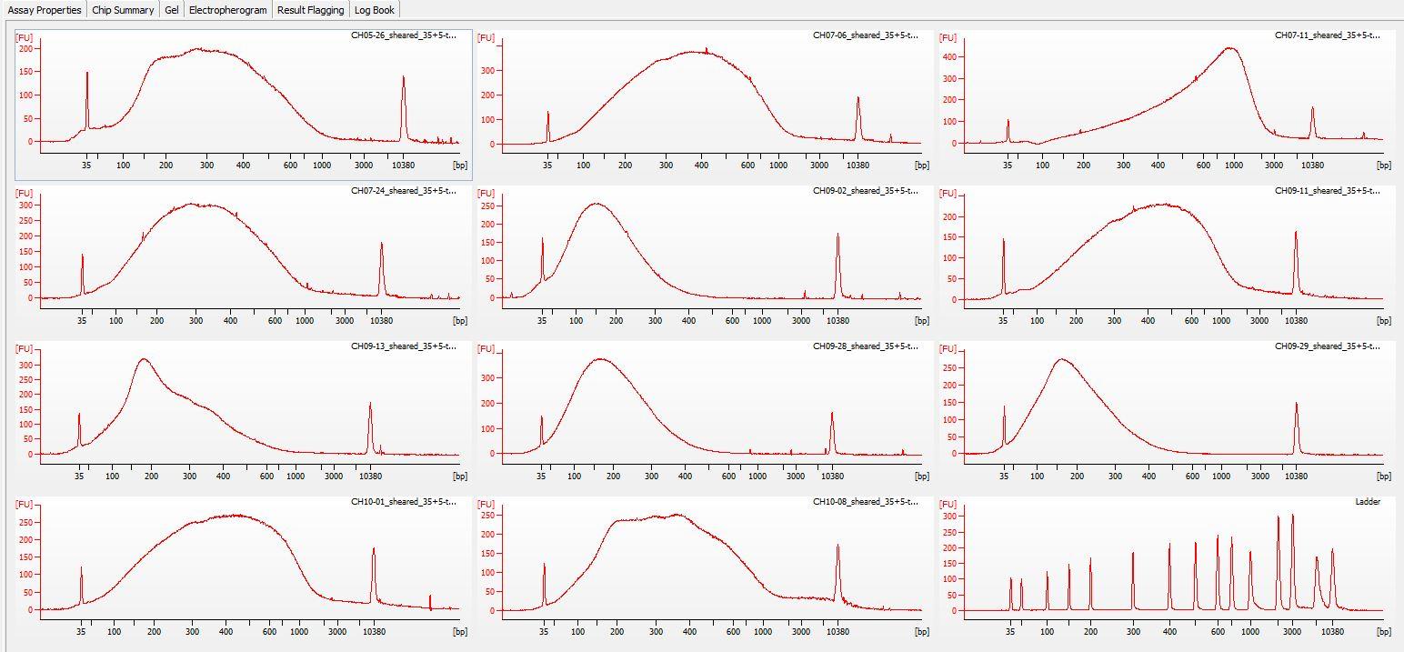 Sheared all-02 Bioanalyzer electropherogram