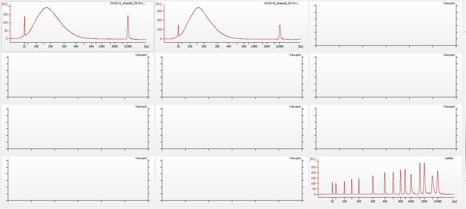 Sheared all-03 Bioanalyzer electropherogram