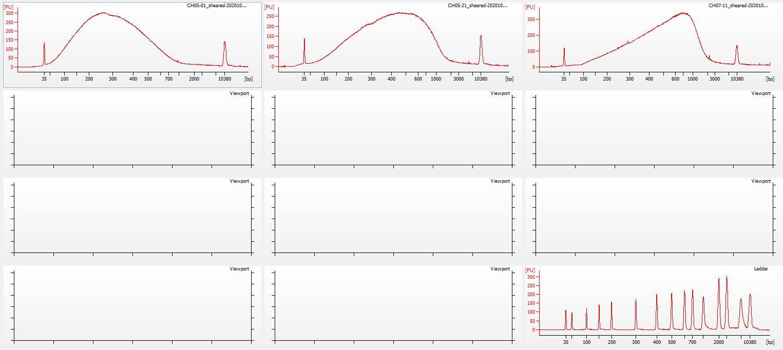 Sheared sheared-20201026+10+15-cycles Bioanalyzer electropherogram