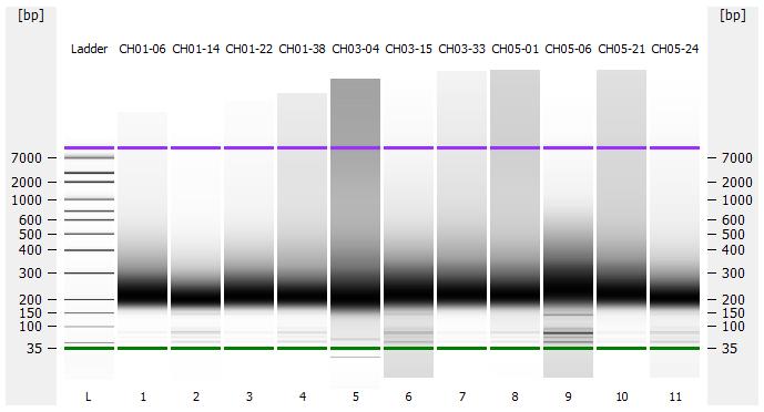 Bioanalyzer gel for all samples in DE72902486_2020-11-25_05-16-07